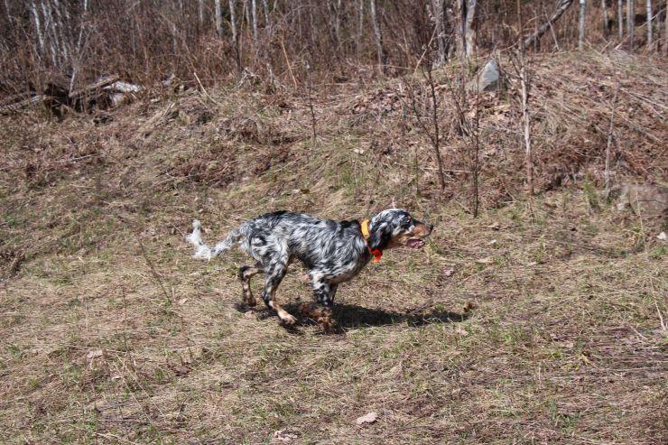 duncan on the run