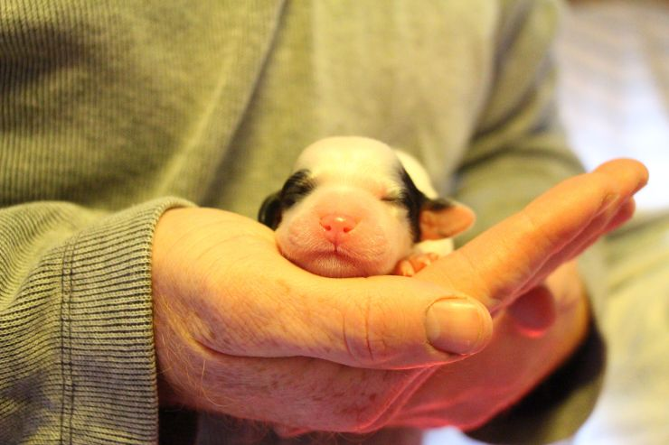 Axle at 1 day old