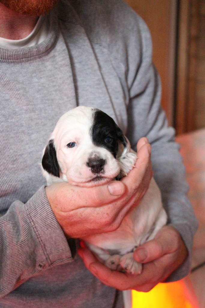 Canon at 3 weeks old