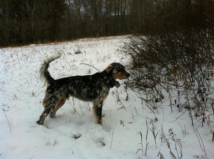 Duncan on Thanksgiving hunt