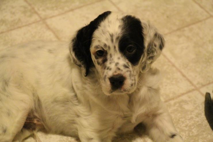 Olympus at 6 weeks old