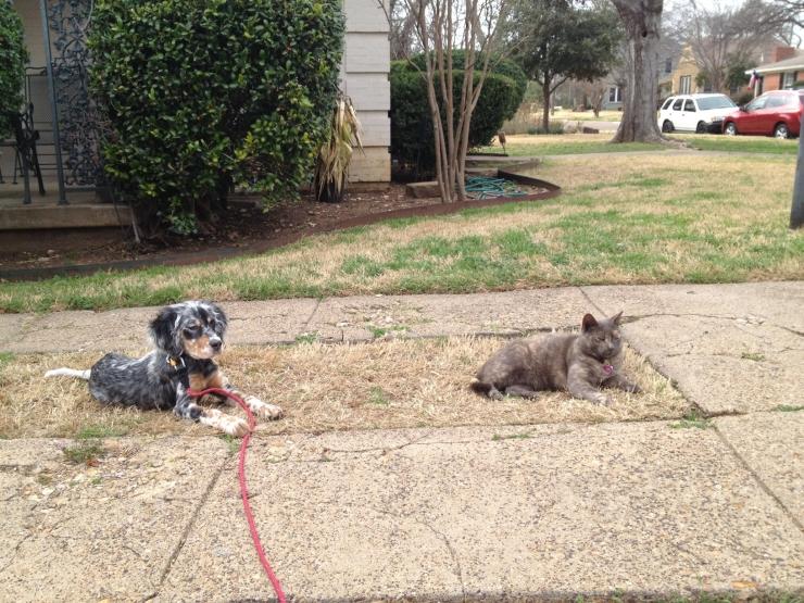 Lhotse formerly Spark Plug (with feline friend)