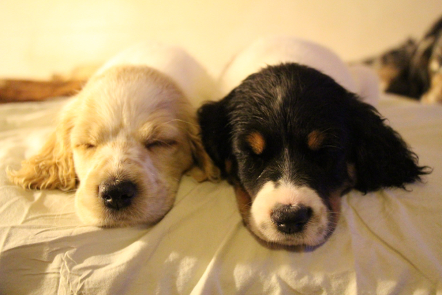 Elroy (left) Jolene (right) sleeping in bed first night home