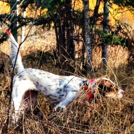 widget pointing grouse3